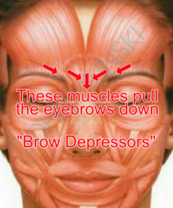Brow Depressors